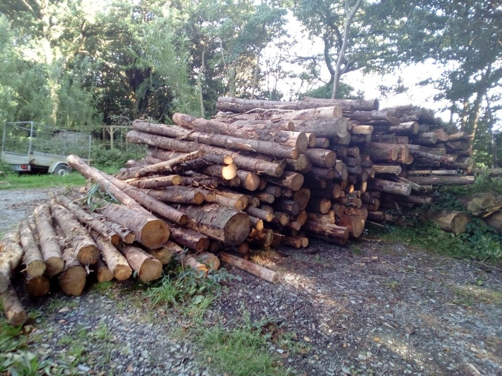 Softwood cord stack